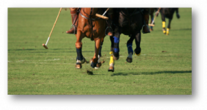 Biotin for Horses Polo Horses running