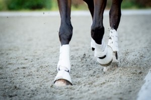 Legwraps horse leg protection important to get your horse back into shape