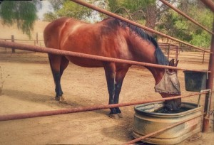Horse Drinking Water